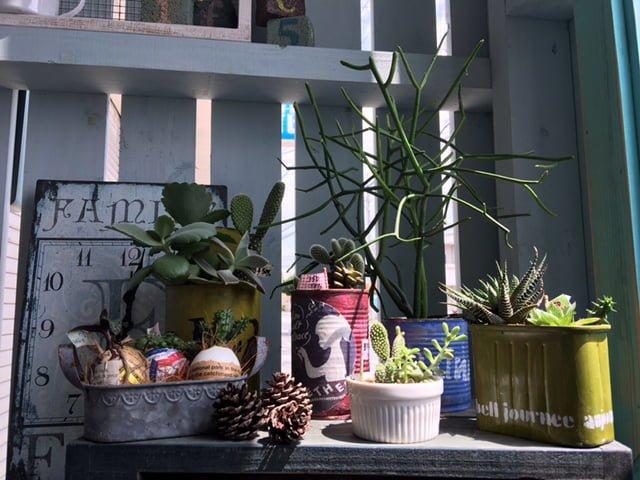多肉植物を並べておしゃれな空間に