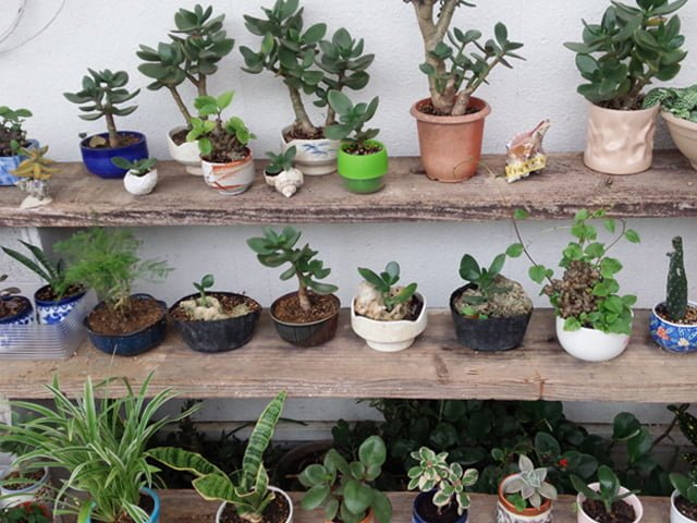 育てている植物