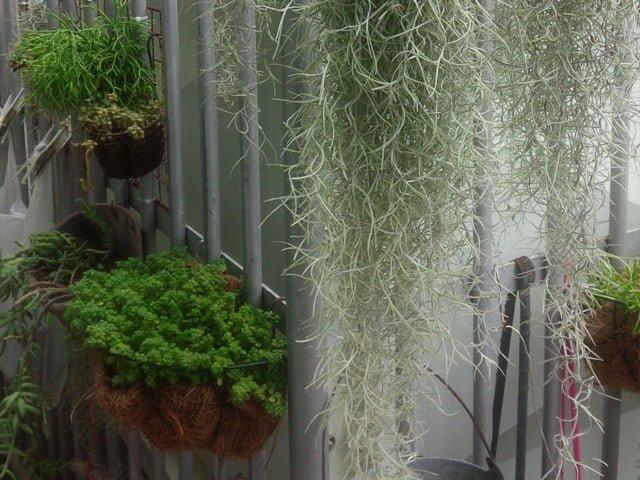 植物を壁掛け